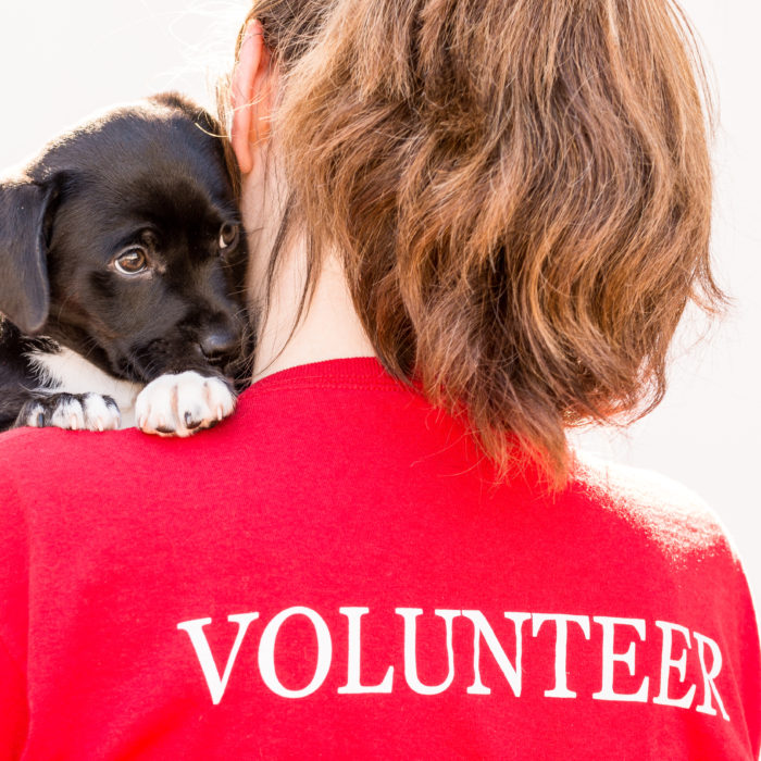 back of volunteer holding a puppy