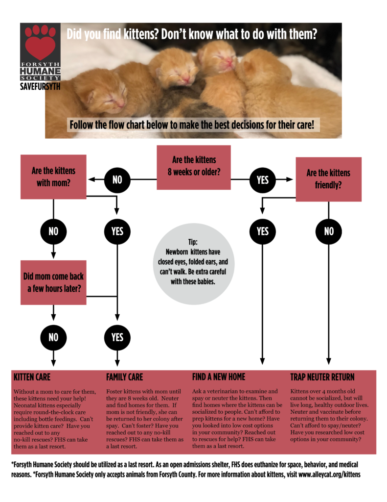 Graphic explaining how to help stray kittens during Kitten Season