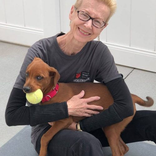 Senior volunteer with puppy in her lap holding a tennis ball in his mouth