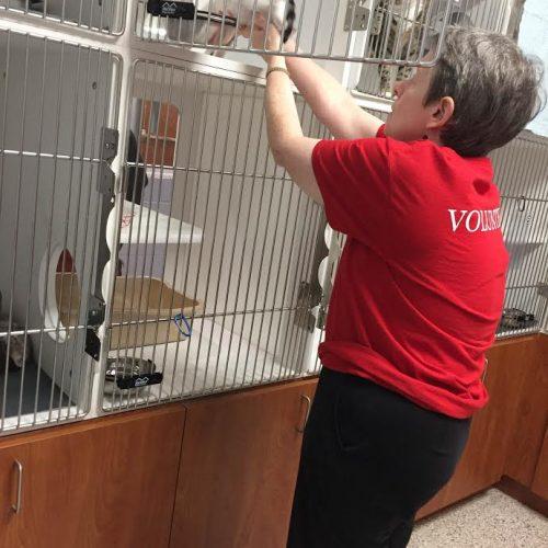 Senior volunteer cleaning cat cage
