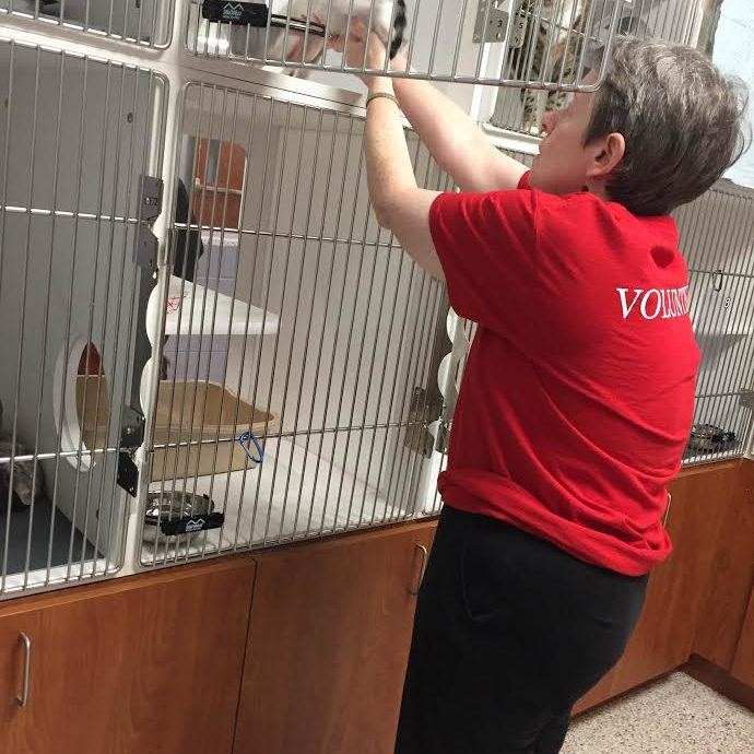 Senior volunteer cleaning cat cage