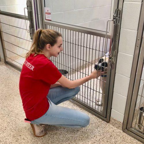 female teen volunteer petting dog in dog kennel