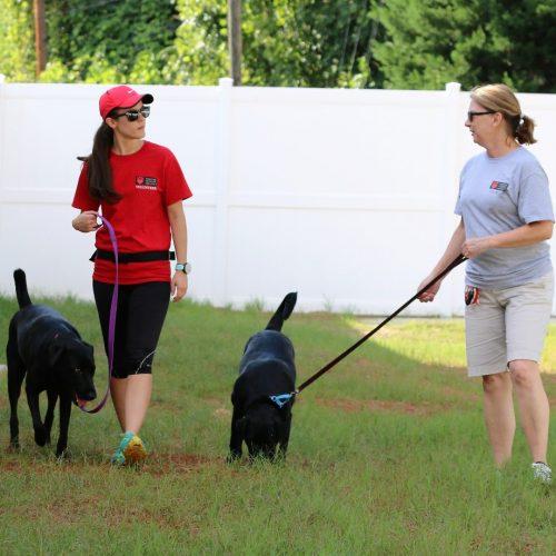 two female volunteers walking medium black dogs