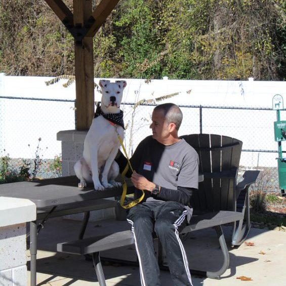 senior volunteer sitting under gazebo with white dog sitting on picnic table