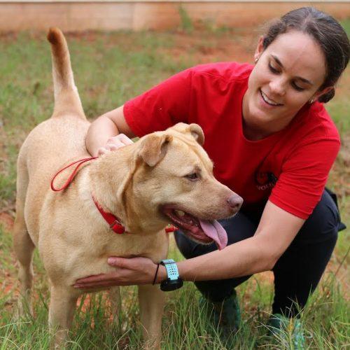 adult volunteer walking tan dog