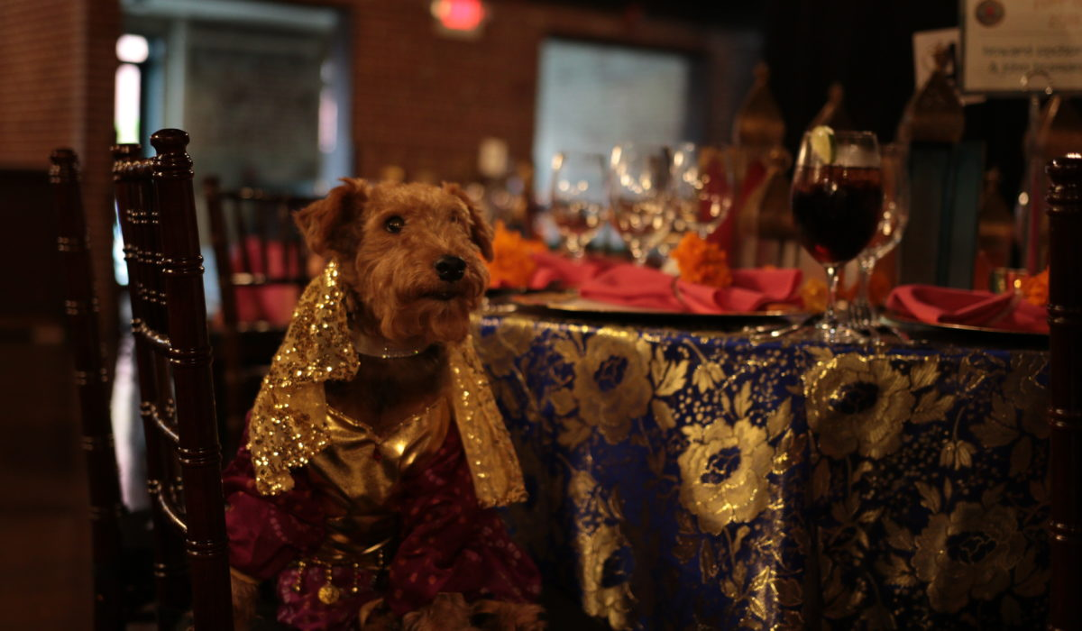 Dog sitting in front of decorated table at black tie gala